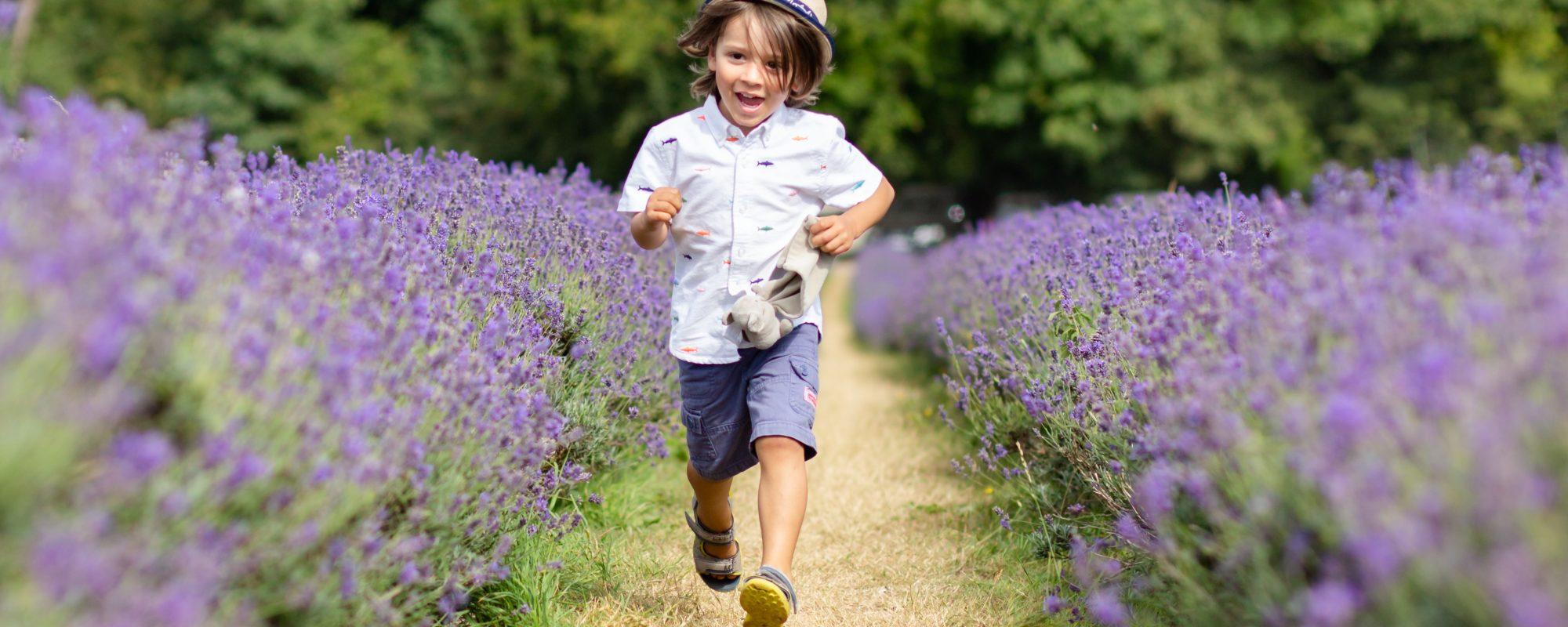Lavender field photoshoot