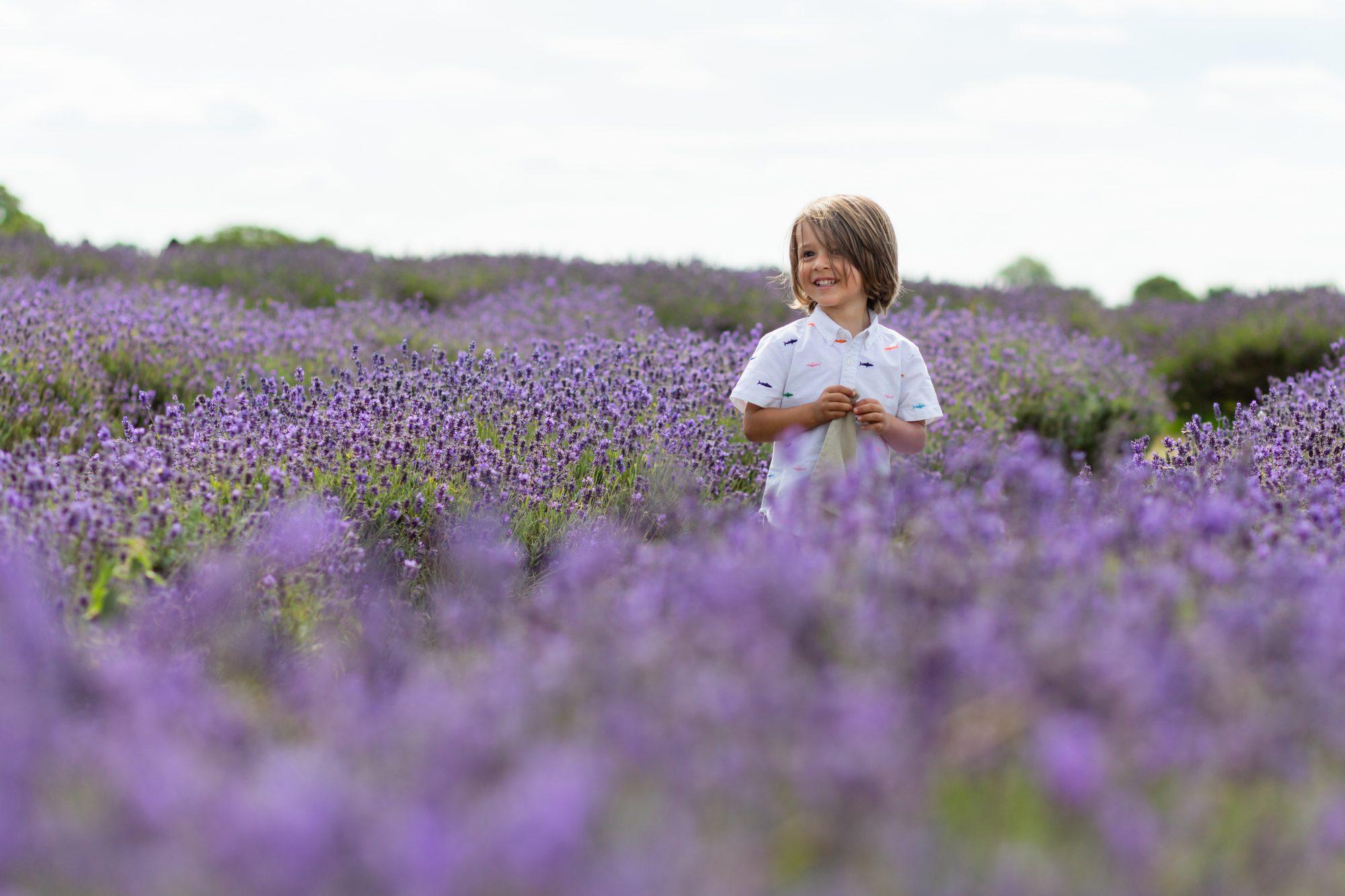 Lavender fields minishoot